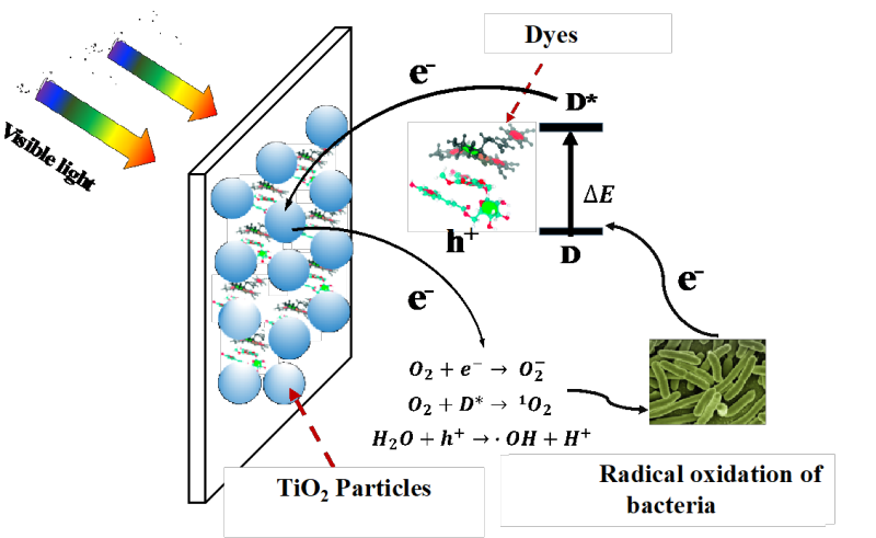 Scheme of a dye-TiO2 antimicrobial packaging material.